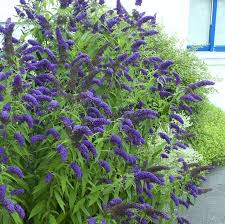 25 beautiful landscaping shrubs ideas on pinterest front house