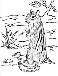 mountain goat coloring page feed