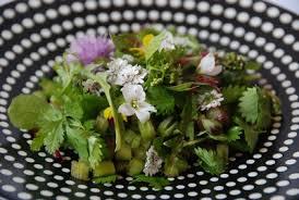 cuisine plantes sauvages salade de plantes sauvages comestibles cuisine plurielle