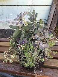 succulent arrangements succulent arrangements entangle living