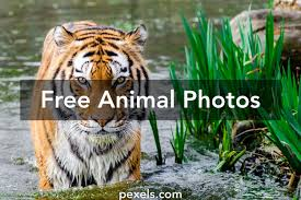 animal pictures pexels free stock photos