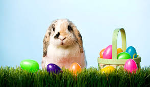 bunny easter since when bunnies lay eggs pastor jayon george