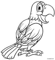 printable parrot coloring pages kids cool2bkids birds