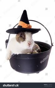 pet halloween background halloween dutch rabbit witches pot wearing stock photo 111619718