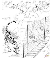 tiger and rhesus macaques in a zoo coloring page free printable