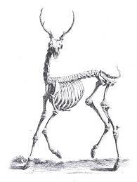 deer drawing sketch drawing art u0026 skethes