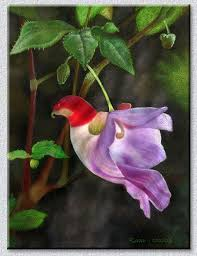 flowers images best 25 rare flowers ideas only on pinterest unusual flowers
