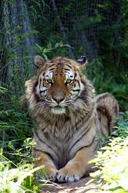 North Carolina wildlife tours images 12 best things to do on jordan lake images jordans jpg