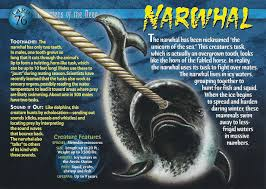 narwhal wierd n u0027wild creatures wiki fandom powered by wikia