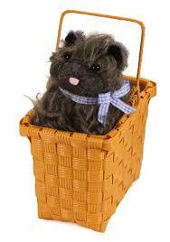 halloween basket toto in the basket