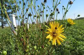 native ohio plants weedpicker u0027s journal july 2012