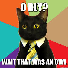Meme Orly - o rly wait that was an owl cat meme cat planet cat planet
