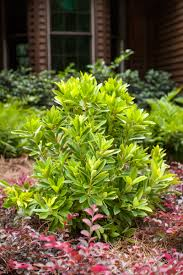 new plants for 2017 landscape and irrigation