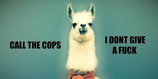 Alpaca Meme - 21 funny llama memes if you don t need no drama