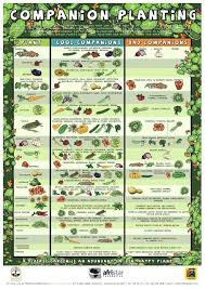 Garden Layout Planting Vegetable Garden Layout Plannerpanion Pdf The Modern Garden