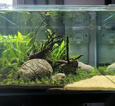 Aquarium Aquascaping 930 Best Aquarium Fish Tank Aquascape Aquascaping Images On