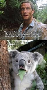 Bear Grylls Memes - funny bear grylls meme humour spot