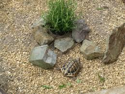 Tortoise Bedding Outdoor Habitats