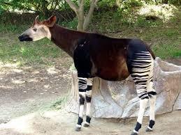san antonio zoo lights coupon 36 best san antonio zoo images on pinterest the zoo zoos and