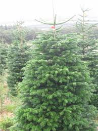 make an impression with a ten foot tree scottish