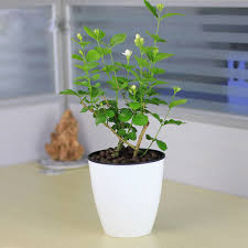 Plants For The Bedroom by 6 Plants For The Bedroom To Help You Sleep Better
