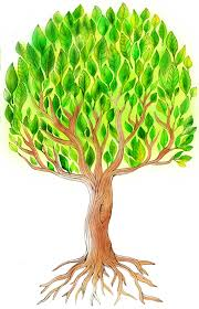 tree illustration for by erina dempsey for children s book website