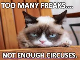 Grumpy Cat Snow Meme - 633 best tribute to grumpy cat images on pinterest grumpy cat