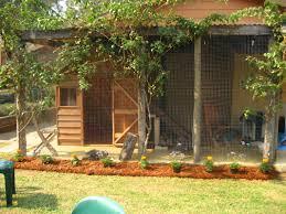 cattery and garden enclosure rumplteeza maine coon cats
