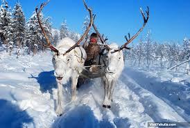 reindeer sleigh trip in oymyakon siberia winter adventure