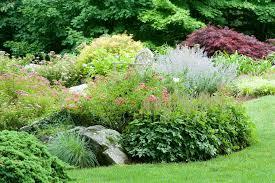 australian native garden plants 100 rock garden plants rock gardens on slopes home design ideas