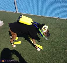 scuba diver diy halloween costume for dogs photo 2 3