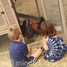 How To Care For Backyard Chickens by Natural Living With Backyard Chickens By Hybrid Rasta Mama