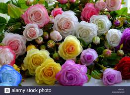 multicolor roses colorful roses flower background of multicolor make