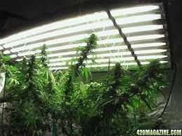 Grow Room Lights Amazing Grow Lights Fluorescent Show Me Your T5 Fluorescent Light
