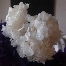 wholesale hydrangeas hydrangeas white 12 bunches