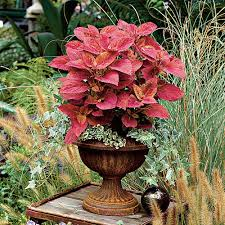 What Is An Indoor Garden Called - spectacular container gardening ideas southern living