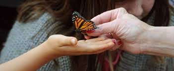 butterfly release this sunday supports bereaved therecord com