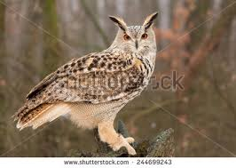 owl on tree trunk stock images royalty free images vectors