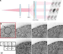 nuclear accessibility of β actin mrna is measured by 3d single