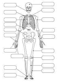 the 25 best human skeleton labeled ideas on pinterest human