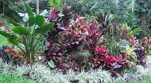 tropical garden ideas qld garden design ideasqld garden design ideastropical garden