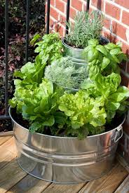potted vegetable garden ideas