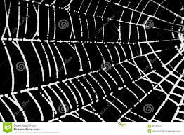 a pretty scary frightening spider web for halloween royalty free
