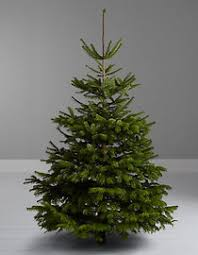 sensational idea real looking artificial tree best most