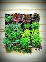 Urban Wall Garden - 68 best vertical garden images on pinterest vertical gardens