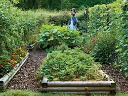 flowers for vegetable garden steal these secrets for growing your own veggie patch southern