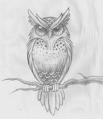 great grey owl clipart simple pencil and in color great grey owl