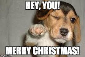Christmas Dog Meme - merry memes bathe r doggie