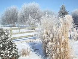 best 25 ornamental grasses ideas on landscape grasses