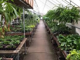 house plants klein u0027s floral